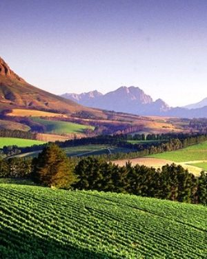 Accommodation Stellenbosch Winelands