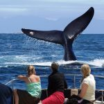 Whale-Watching strand