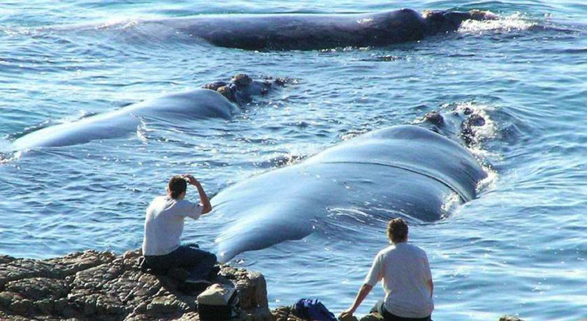 Whale watching, Strand Beach Lodge Accommodation