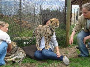 cheetah outreach things to do in strand