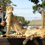 Optimized-Cheetah Outreach Strand